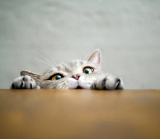 Curiosity, The Cat, And You.
